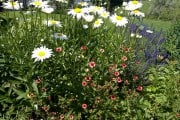 Blumen blühen ja zum Leben